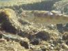 2008_005